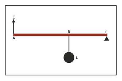 Class II Levers Physics