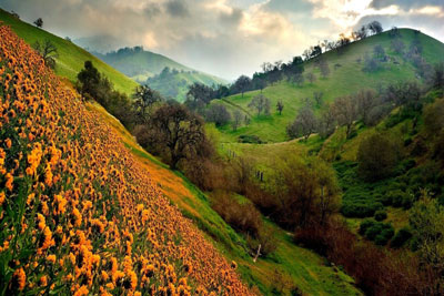 Valley Flowers Uttarakhand India