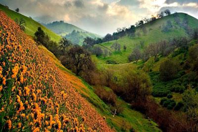 Valley Flowers Uttarakhand India