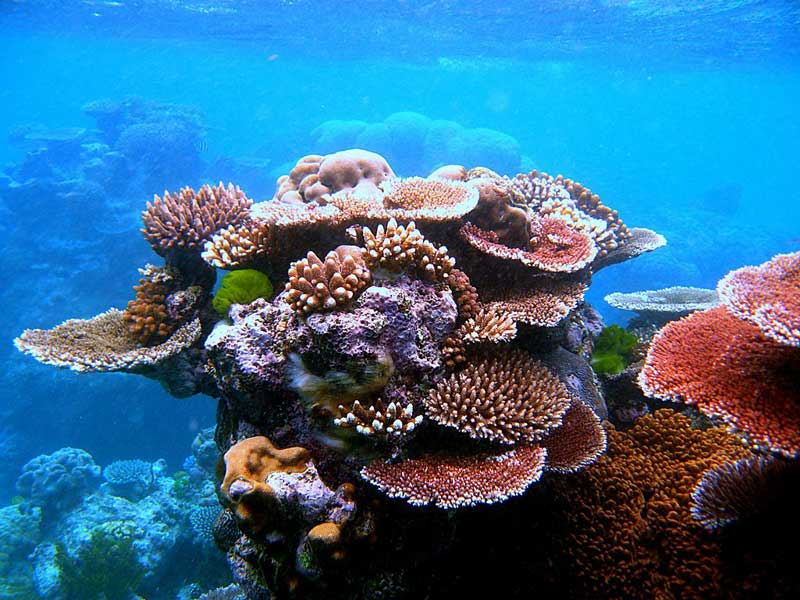The beauty of the Great Barrier Reef