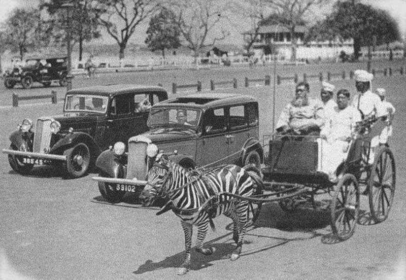 The Zebra Carriage
