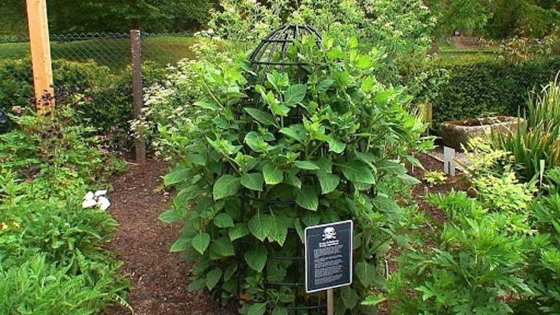the alnwick poison garden