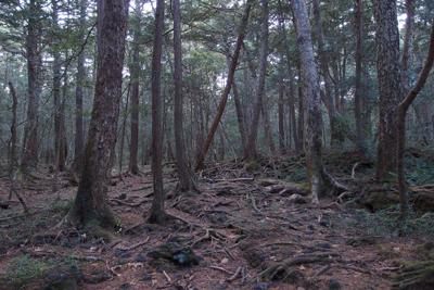 Aokigahara Forest Japan